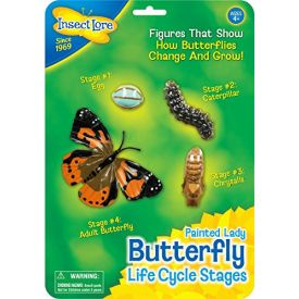 Insect Lore Life Cycle Stages Butterfly